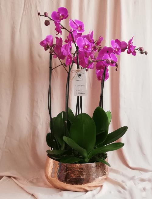 orquidea orquideario regalo orquideas