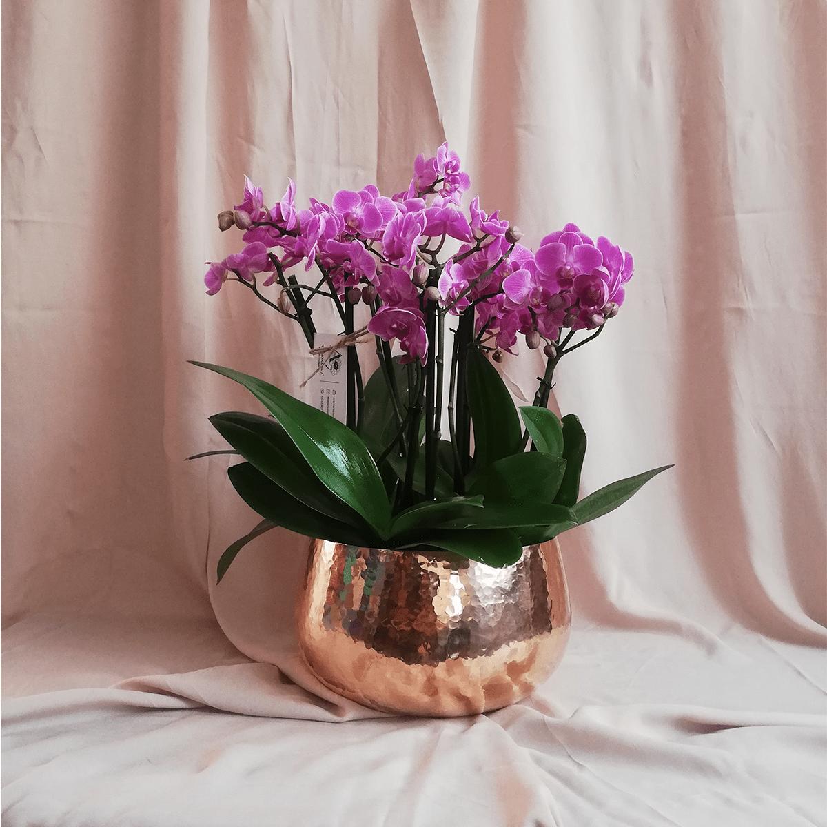 arreglo de orquideas