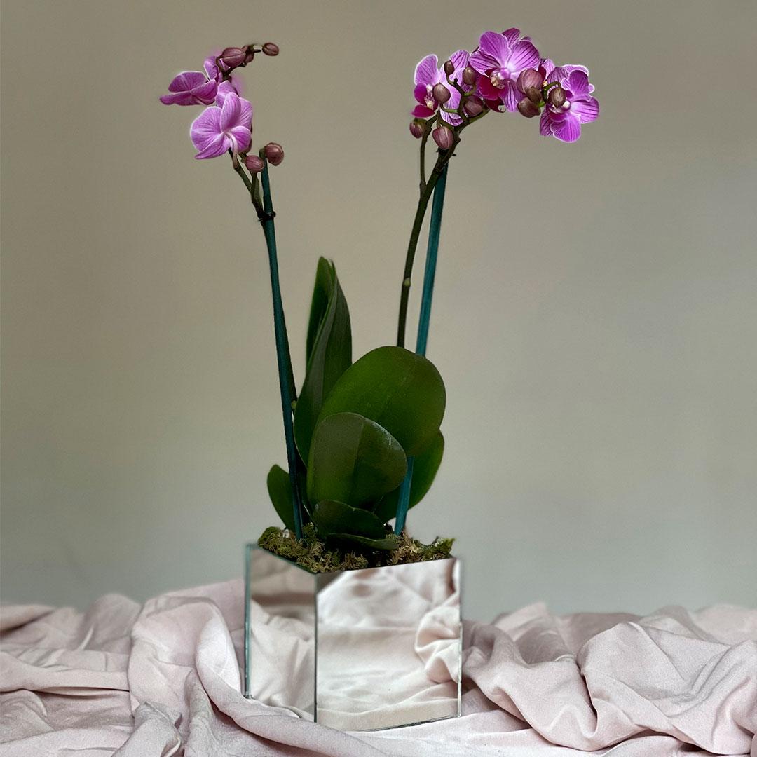 arreglo orquidea flores regalo flores entregas